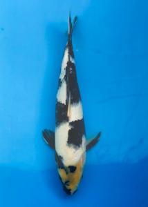 010-Abhilawa-Lombok-WWF-Lombok-Shiro-30-Unknown